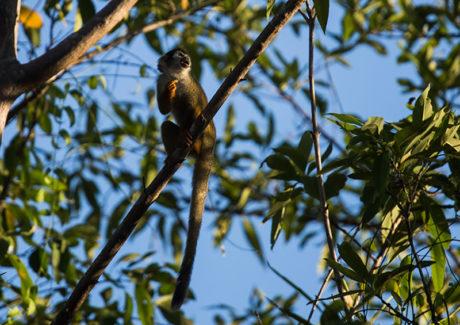 Criada a Conferência Eclesial da Amazônia