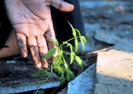 Irmãos para o futuro: Re-speitar, re-conhecer o bem divino na Criação