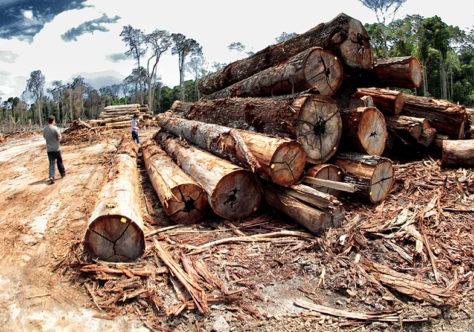Em carta ao Senado, bispos da Amazônia pedem a retirada de tramitação do PL da Grilagem