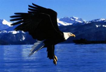 Vôo da águia