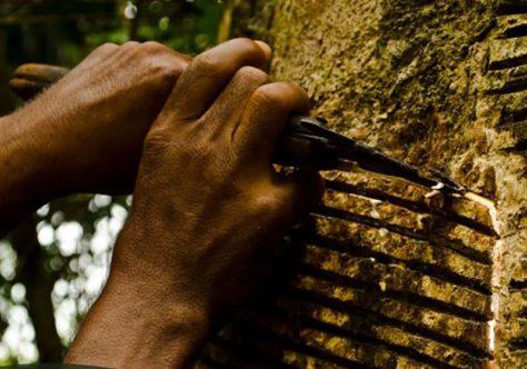 O legado de Chico Mendes para o Sínodo Panamazônico