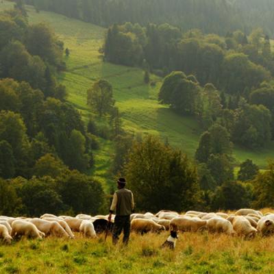 Salmo 22: o Senhor é meu pastor! Ele está comigo, cuida de mim e estou com Ele.