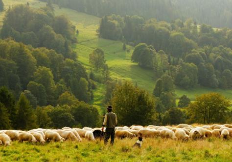 Somos os pastores e os mercenários da metáfora do cuidado em Jo 10,11-18 e na Igreja e no país divididos