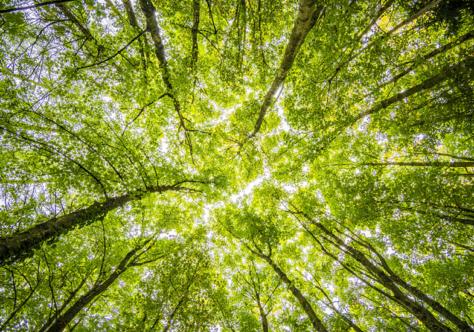 O papel da Igreja no combate ao desmatamento