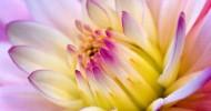 Flower-Wallpaper-flowers-249402_1024_768
